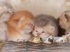 happy esaster cats by golden neko cattery