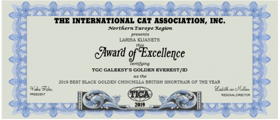 2019-BEST-BLACK-GOLDEN-CHINCHILLA-BRITISH-SHORTHAIR-OF-THE-YEAR-1