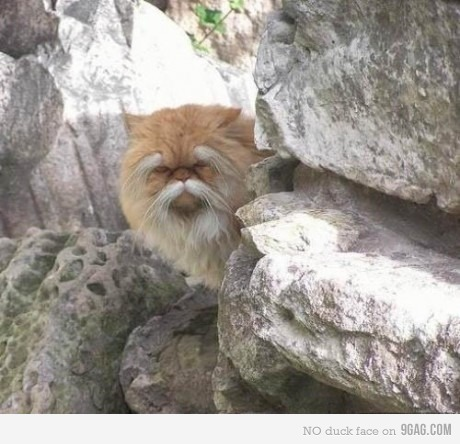 Very ancient cat.