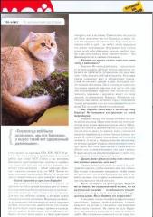 3-zolotoy-korrado-of-golden-neko-moj-drug-koshka-2013-2
