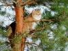 Golden Neko Cattery Tomcat:)
