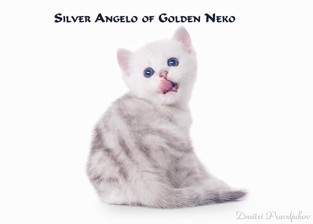 Silver Angelo of Golden Neko