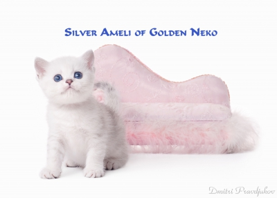 Silver Ameli of Golden Neko