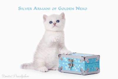 Silver Armani of Golden Neko