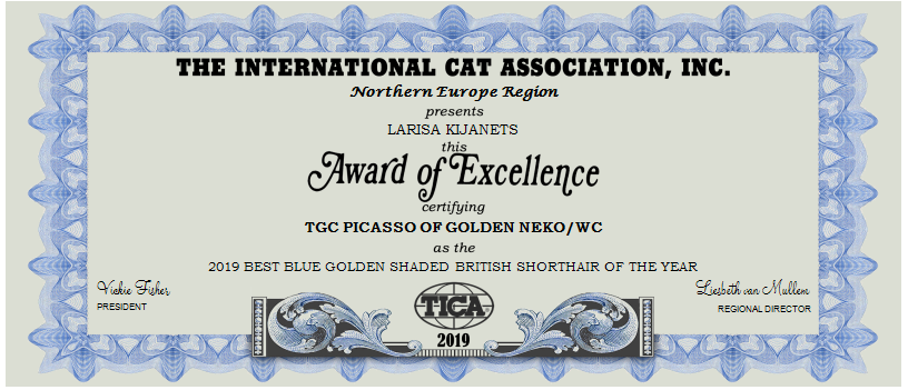 2019-BEST-BLUE-GOLDEN-SHADED-BRITISH-SHORTHAIR-OF-THE-YEAR-1