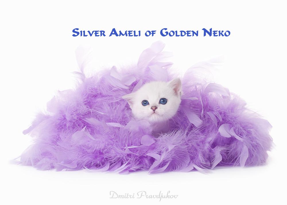 Silver Ameli of Golden Neko