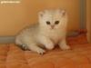 Silver Yesenia no Demetra BRI  - 4 weeks.jpg