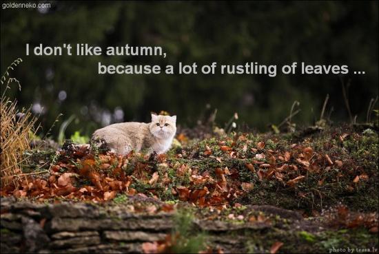 autumn-of-goldenneko-com-kotomatrix-corrado
