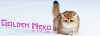 header_snow_ru